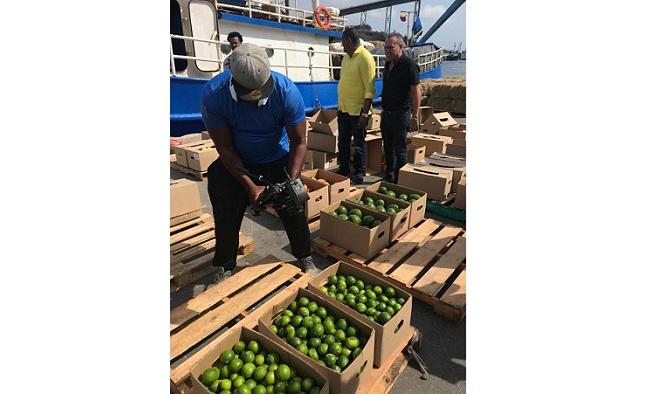 Aspecto de los frutos del campo que los guajiros cosecharon y que fueron exportados a la isla de Curazao.